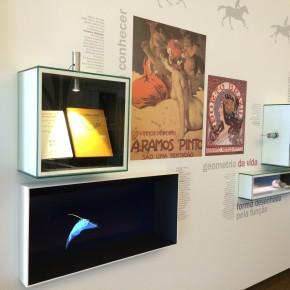 exposição permanete Museu Arte Nova