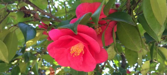 Roteiro para descobrir o Porto em época de camélias | A camellia's journey in Porto
