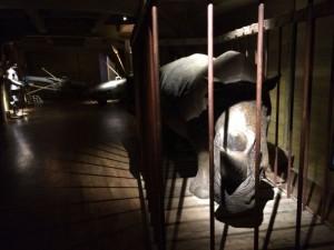 Rinoceronte no WoD