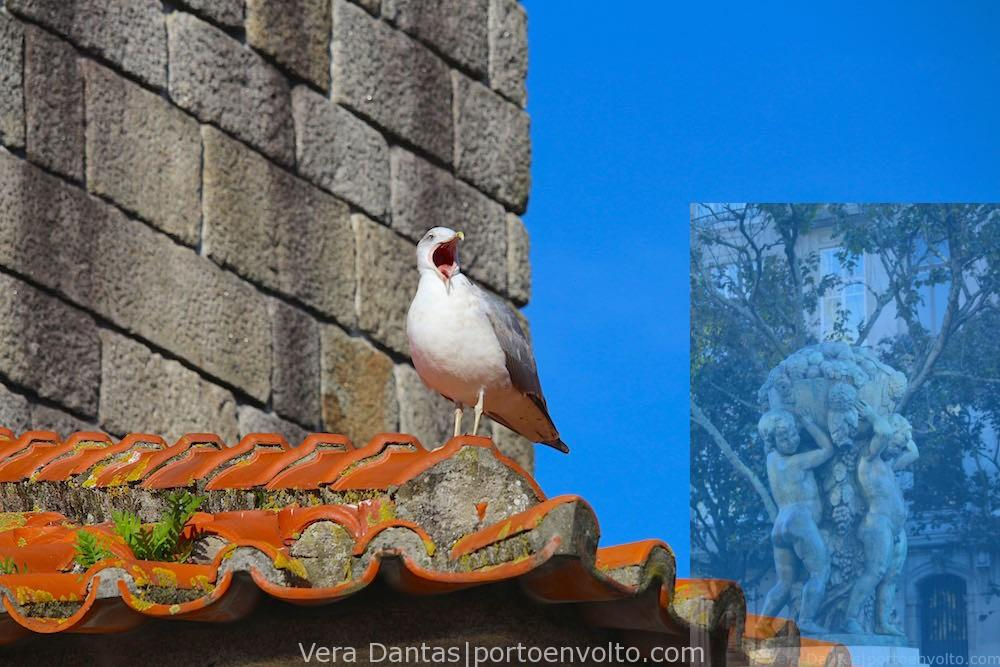 Seagull yawning in Porto historical center by Vera Dantas