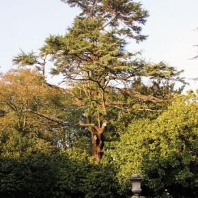 Villar d'Allen trees