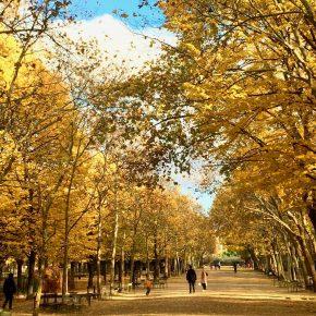 """Jardin du Luxembourg: a """"joie de vivre"""""""