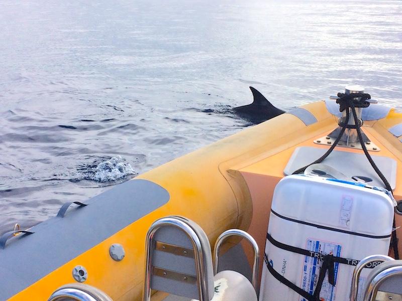 Golfinho abordando barco